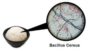 bacilus-cereus-rice